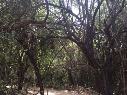 Pathways_Copalita